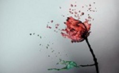 rosa-de-agua-by-fernando-gregory